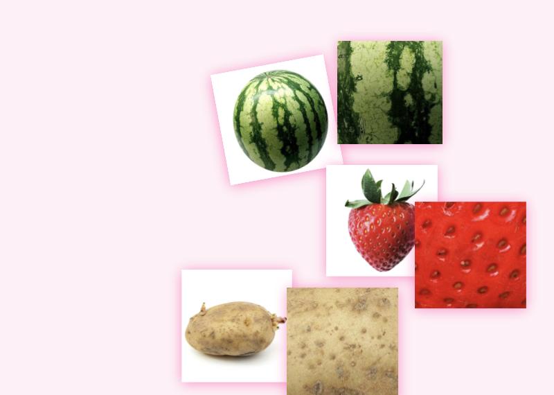 Bei dieser Vorlage erhalten Sie 30 Kärtchen mit je einer Frucht und ihrer vergrößerter Schale.